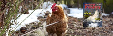 backyard poultry magazine