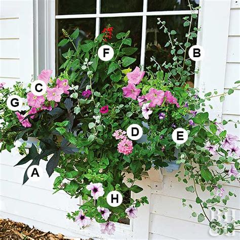 Ideas For Container Gardens Container Gardening Ideas For Sun House Decor Ideas