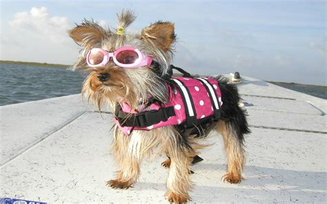 8 top tips for fun and safe boating with dogs inside - Dog Boat Clothes