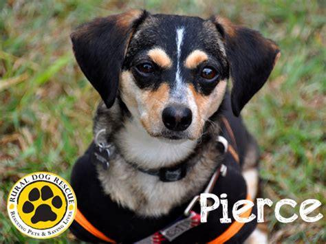 rural rescue popville 187 your adoptable animal fix