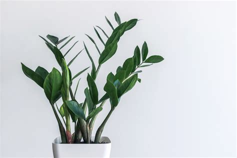 plants to keep in bathroom 8 shower plants that want to live in your bathroom