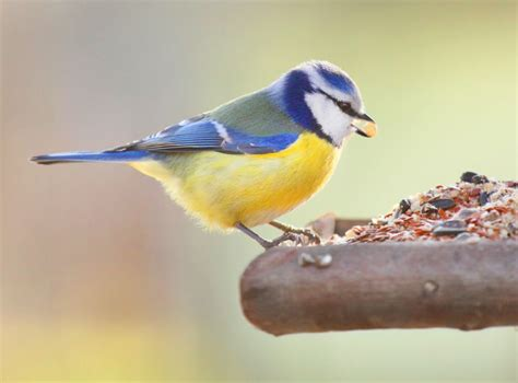 how to care for wildlife in your garden over winter