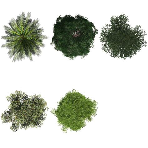 Trees Top png tree top tree top view png transparent set of 5