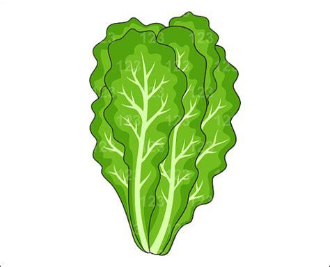 House Designs Images Lettuce Clip Art Images Illustrations Photos