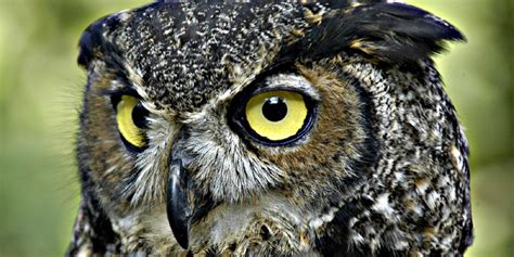 a look at the eight owls found in pennsylvania