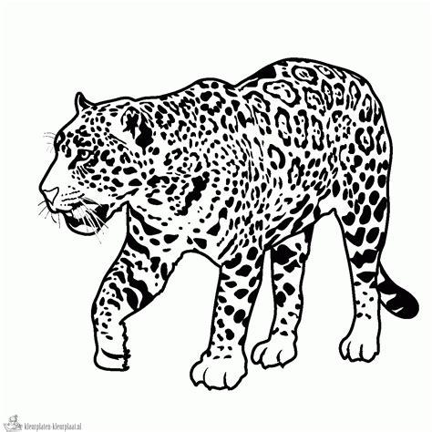 realistic jaguar coloring pages kleurplaten jaguar kleurplaten kleurplaat nl