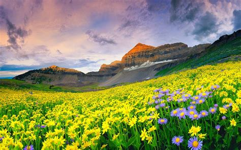 wallpaper mountain flower extreme beauty  nature