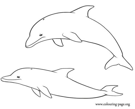 dolphin coloring page pdf dolphin printables dolphin coloring pages printable