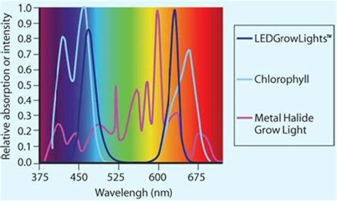 led vs fluorescent grow lights led vs hid lights ledgrowlight hydro com