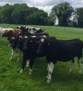 kevin farrell's farm one of the country's best calf to
