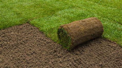 sod grass sod install dwarf fescue sod lawn image titled