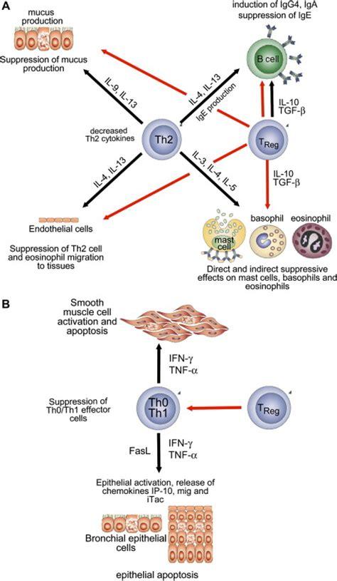mechanisms of allergen specific immunotherapy mechanisms of allergen specific immunotherapy journal of
