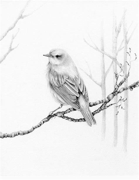 bird art drawing birds 1782212965 pencil drawings of birds bird drawing pencil drawing giclee fine art the question is whe