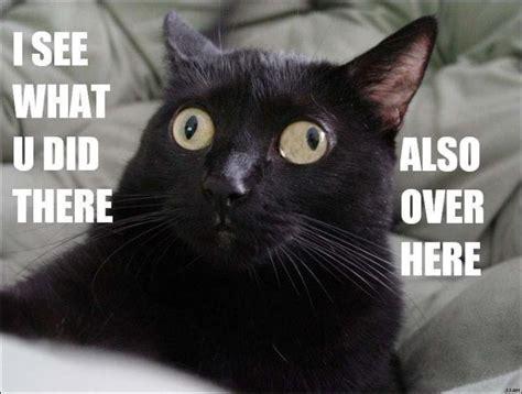 Funny Black Cat Memes - cat macros cat macros page 36