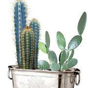 fioriere in plastica prezzi fioriere in plastica vasi e fioriere modelli prezzi
