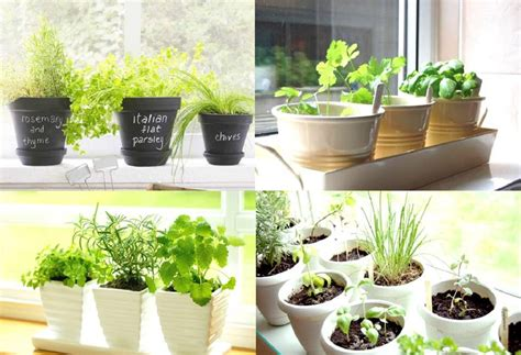 kitchen herb garden ideas apartment plants vines plantfiles pictures butternut
