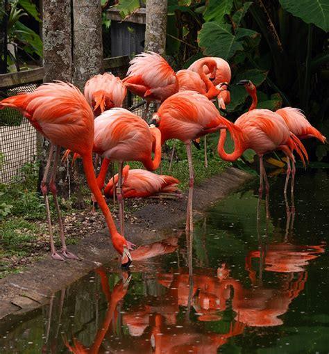 discount for flamingo at flamingo gardens in broward