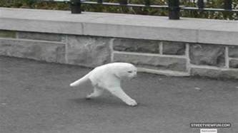 streetviewfun 16 weirdest people on google maps street view