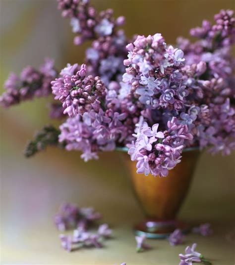 pretty in pink and purple on pinterest lilacs beautiful spring and flower on pinterest