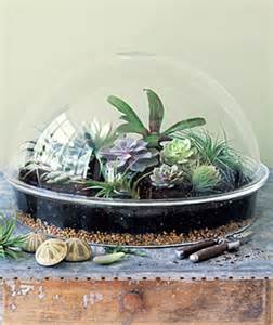 10 cool tabletop terrariums shelterness