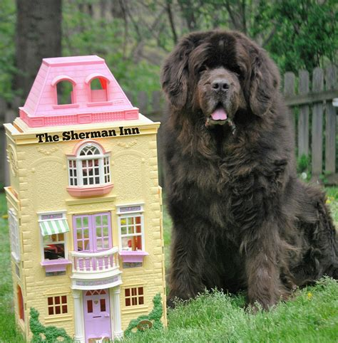 motels that allow dogs the 5 best big friendly hotel chains mybrownnewfies