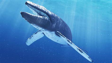 Whale L by Blue Whale Arrestato L Ideatore Le Malelingue