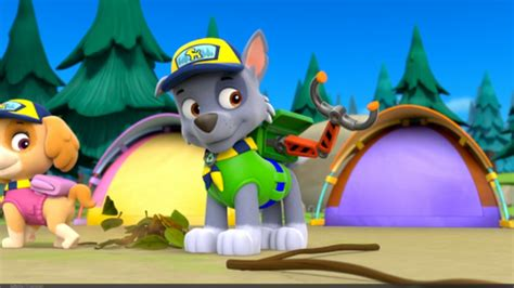 paw patrol breeds paw patrol images rocky the mixed breed hd wallpaper and background photos 40126933