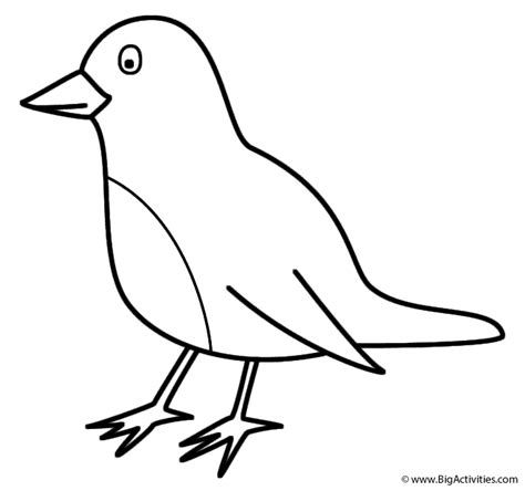 robin printable coloring page robin coloring page birds