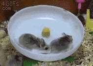 Cabin Fever Gif by Giphy Gif