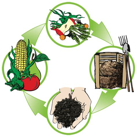 Superb Bag Gardening #1: Compost-cycle-3.png