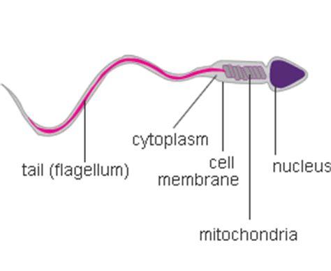 epigenetic memory   embryogenesis