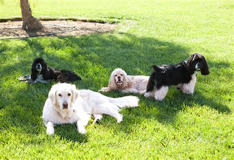 oprah s dogs oprah s home makeover oprah s decorating style