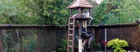 how to keep cats out of your backyard southern plantation