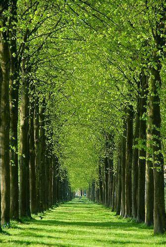camino verde camino verde het loo apeldoorn pa 237 ses bajos