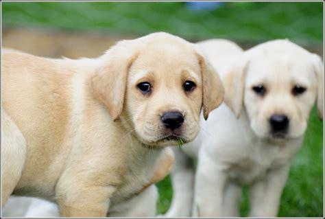 dogs wiki list of small breeds wiki pet photos gallery az3wdqzbrj