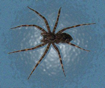Can A Garden Spider Kill You Can You Be Holistic And Kill A Spider Alternative