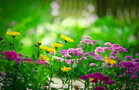 imagenes flores bellas gratis fondos de pantalla de flores hermosas en hd gratis para