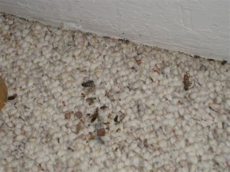 Bugs In A Rug by Carpets Bugs