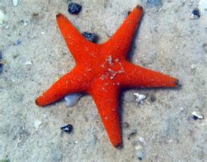 starfish colors fish coloring pages and facts