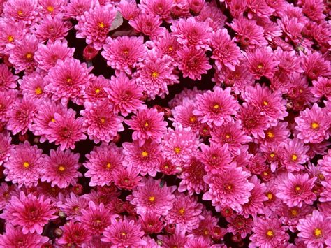 Pink Flower Garden Pink Garden Flowers Pictures Just For