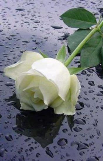 New Mawar Syari mawar putih andayani yunas wattpad
