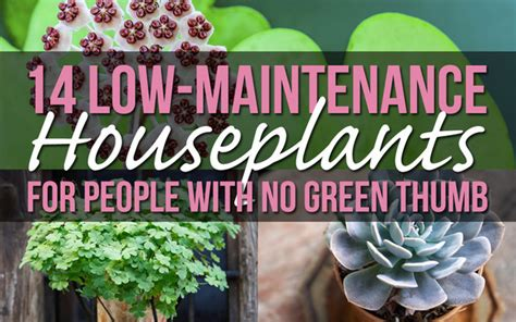 10 low light low maintenance plants for office desk 14 houseplants for people with no green thumb