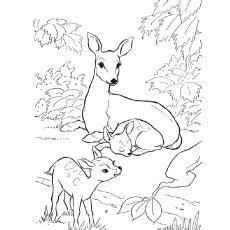key deer coloring page deer coloring pages bestofcoloring com