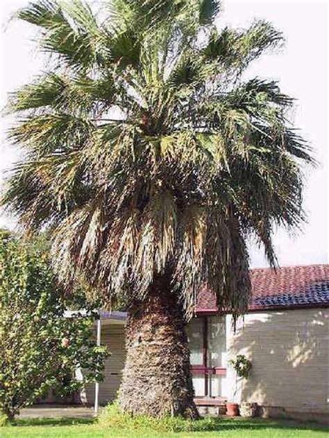 Exotische Pflanzen Winterhart 1376 winterharte exoten florashop2000