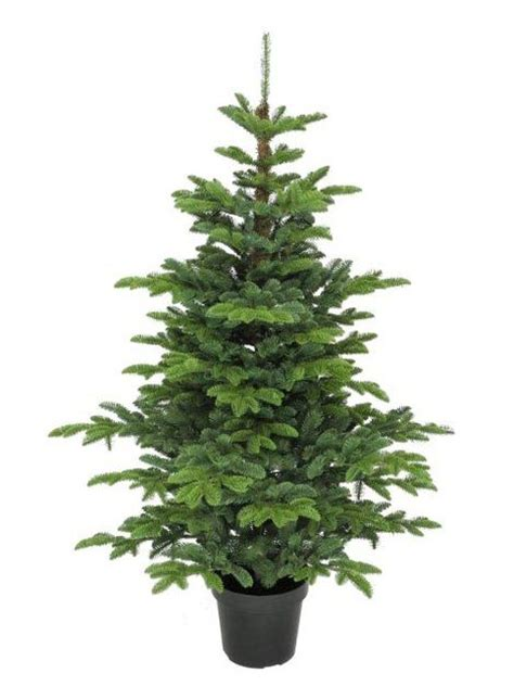 5ft potted eden pine 100 feel real artificial christmas