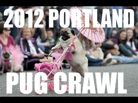 pug puppies portland oregon 2012 pug rescue of new prone s pug social so doovi