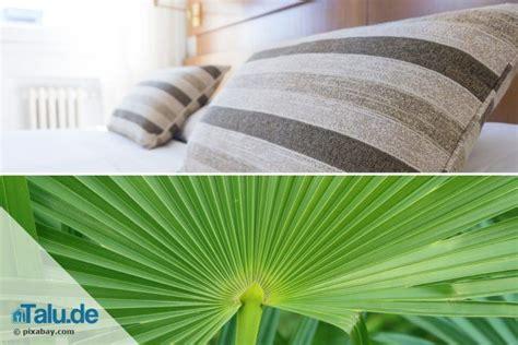 Pflanzen Schlafzimmer by Pflanzen Im Schlafzimmer 14 Gesunde Zimmerpflanzen Talu De