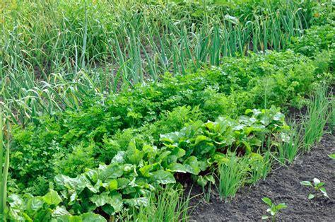 Wann Tomaten Säen 5395 by Plan Jardin Potager Am 233 Nagement Potager Et Plan De Jardin