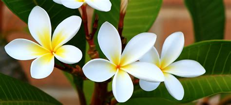 Blooming Plants by Summer Flowering Plants Flower Power