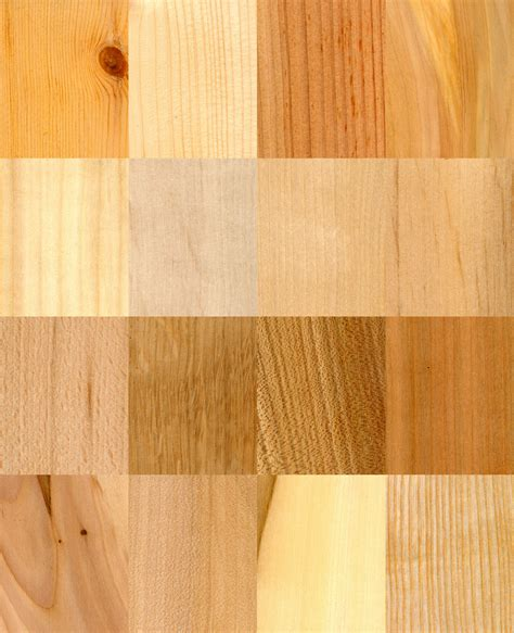 define wood heartwood definition what is